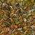 bush_medicine_leaves_13_photo_slideshow.jpg