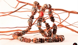 aboriginal_gumnut_necklace_10_photo_slideshow.jpg