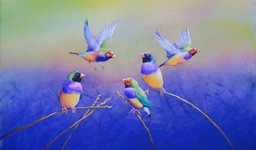 gouldian_finches_photo_slideshow.jpg