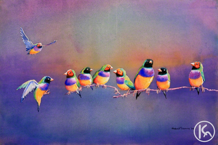 Gouldian Finches (09011464)