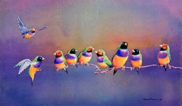 gouldian_finches_1_photo_slideshow.jpg