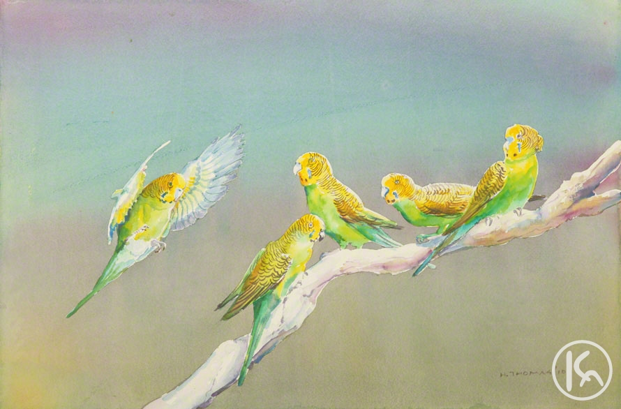 Budgerigars (10022054), Harold Thomas
