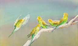 budgerigars_photo_slideshow.jpg