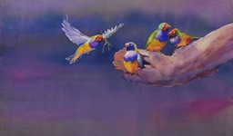 Gouldian Finches (10052169)