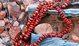 aboriginal_ininti_seed_necklace_photo_slideshow.jpg
