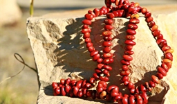 Ininti Seed Necklace (AN12045224)