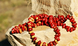 Ininti Seed Necklace (AN12045230)