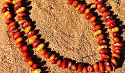 Ininti Seed Necklace (AN12045234)