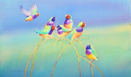 Gouldian Finches (09122004)