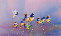 Gouldian Finches (10022049)