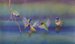 Gouldian Finches (10052168)